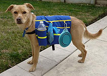Picture of dog carrying supplies