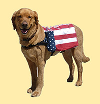 Dog pack: Patriotic 2 Pack